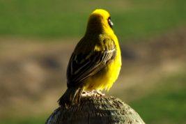 Birdwatching at Karoowater and surrounding area...