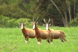 Wildlife Watching at Karoowater and surrounding area...