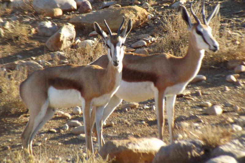 Animal park at Karoowater Guestfarm, between Oudtshoorn & Calitzdorp, Western Cape